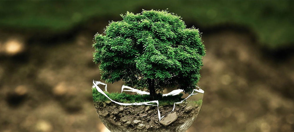 Zero Carbon Emissions
